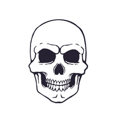 doodle human skull with a terrible smile vector image