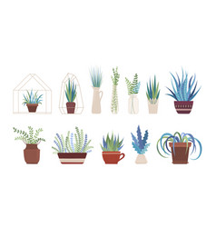 houseplants flowers in vases and pots flat set vector image