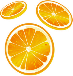 orange slice - isolated on white background vector image