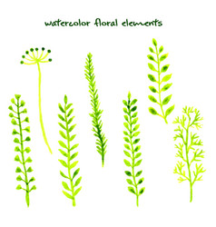 Set different watercolor hand drawn herbs vector