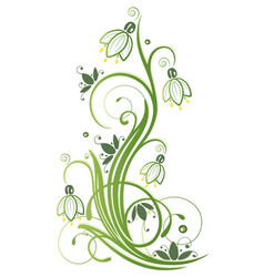 Snowdrop flowers spring and winter vector