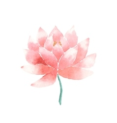 Watercolor lotus flower pink vector