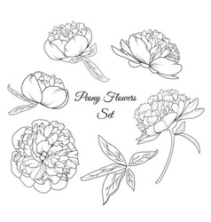 peony rose flowers reusable elements template set vector image vector image