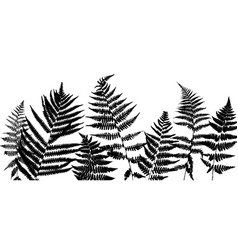 Background with fern leaves vector