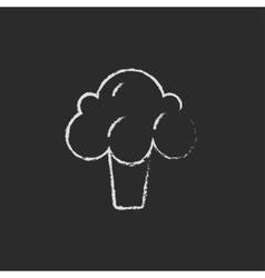 Broccoli icon drawn in chalk vector