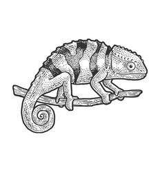 Chameleon lizard sketch vector