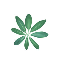 green tropical plant tropic botany element vector image