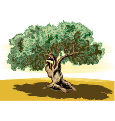 Old olive tree and tortuous vector