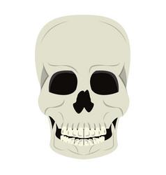 skull human skeleton cartoon isolated symbol vector image