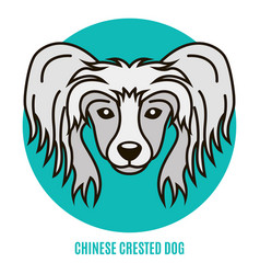 Portrait of chinese crested dog vector