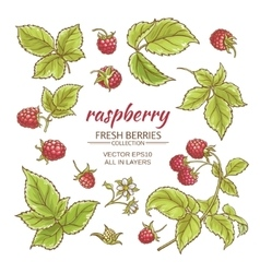 Raspberry set vector