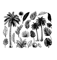tropical coconut palm trees black and white hand vector image
