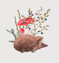 watercolor hedgehog vector image