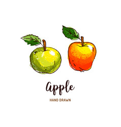 apple drawing hand drawn apples watercolor vector image