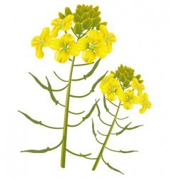 mustard flower vector image