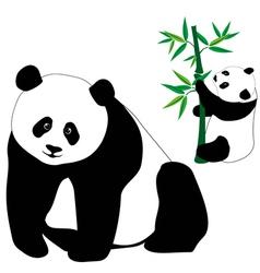 set cute panda bears with bamboo vector image