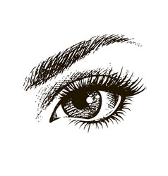 beautiful female eye hand drawn vector image vector image