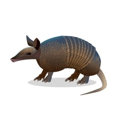 Armadillo isolated Realistic placental mammal vector