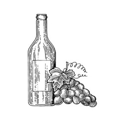 Bottle of wine and grapes engraving style vector