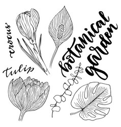 flowers set hand drawn with leaves and flowers vector image