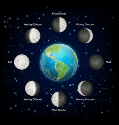 Moon phases realistic vector