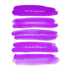 set of purple watercolor on white background vector image
