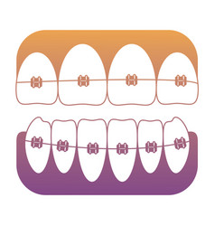 Teeth with brackets icon vector