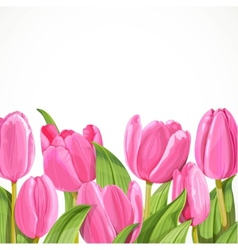 Pink tulip on white background vector image vector image