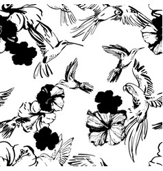 black and white sketch parrots hummingbirds vector image