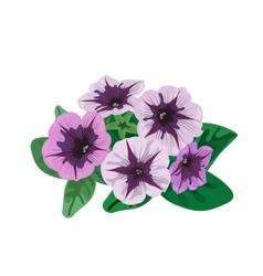Petunia flowers bush vector