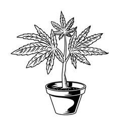 Pot cannabis drawing vector