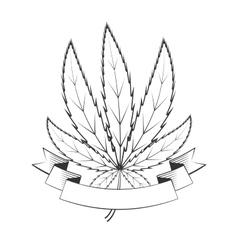 cannabis green leaf vector image