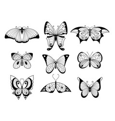set of different butterflies and bugs with vector image