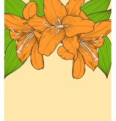 beautiful background with lilies hand-drawn vector image vector image