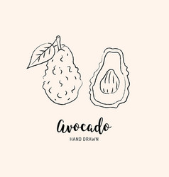 Avocado drawing hand drawn avocado sketch vector