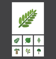 Flat icon nature set of leaves baobab jungle and vector