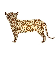 Isolated jaguar design vector