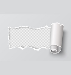 torn paper edge realistic transparent header hole vector image