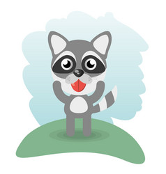 cute raccoon animal wildlife vector image