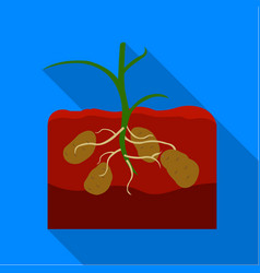 potato icon flat single plant icon from the big vector image vector image