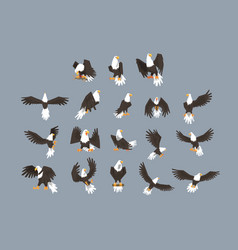 Bald eagle image set on grey background vector