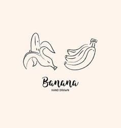 banana fruit drawing hand drawn bananas vector image