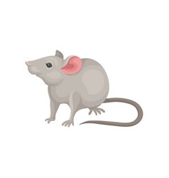Flat icon of mouse rodent with pointed vector