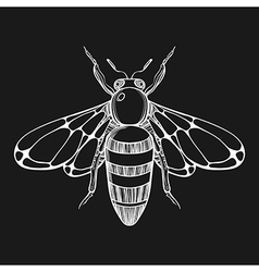 Hand drawn engraving Sketch of Bee for tattoo vector