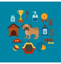 Pug dog infografic concept with dog care isolated vector image