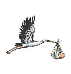 Stork crane carry baby color sketch engraving vector