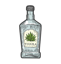 tequila bottle sketch vector image