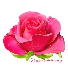 Pink rose Happy Valentine day vector image