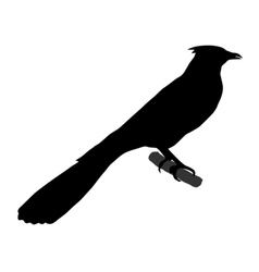 Black silhouette of cuckoo vector
