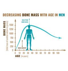 decreasing bone mass vector image
